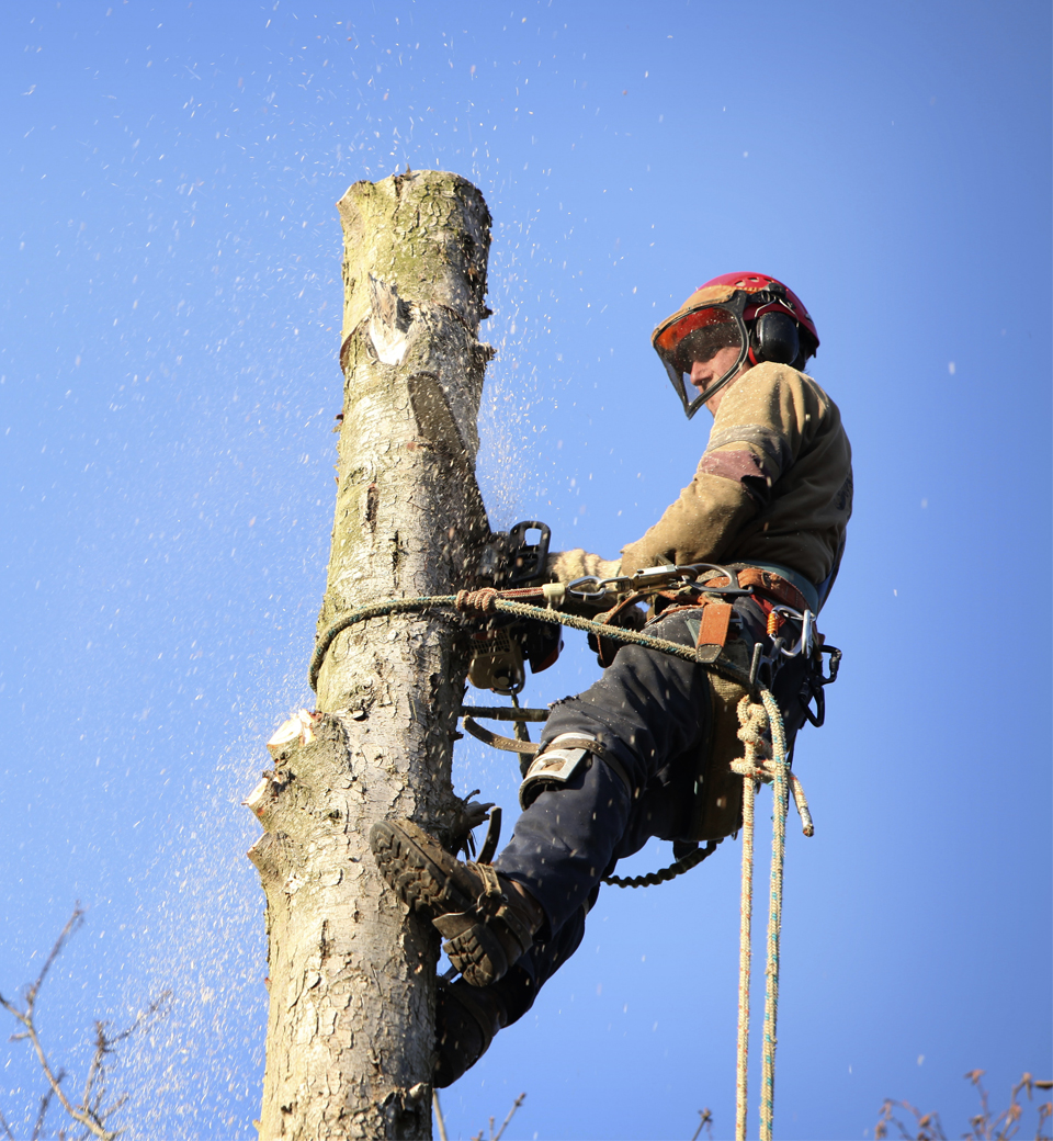 best manhattan emergency tree companies